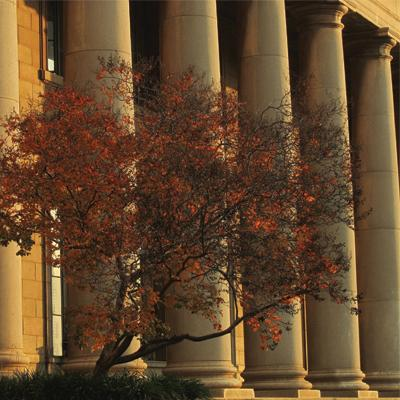 Wits buildings