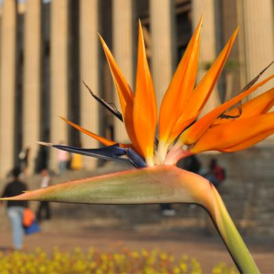 Wits University campus