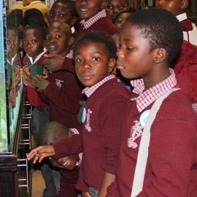 A group of school children look at the marine tank