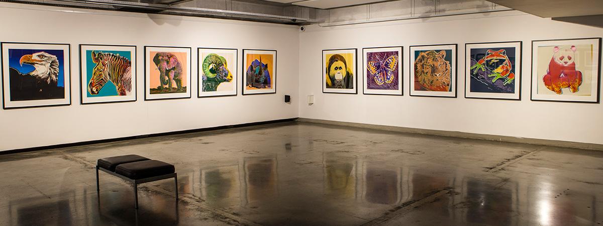 exhibitions wits university