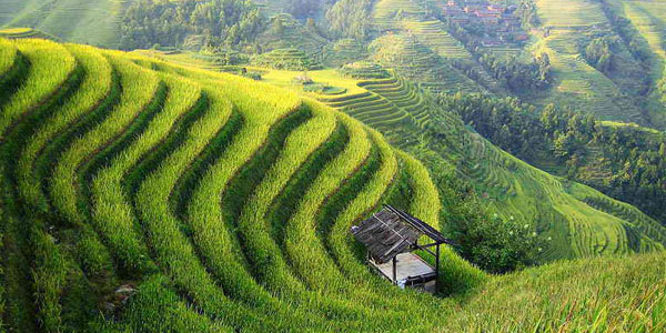 Farming in China