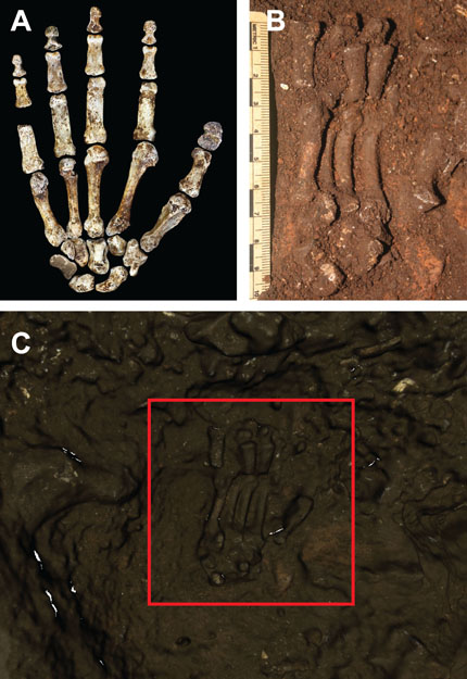 Homo naledi hand shown in ground and as a 3D scan in ground
