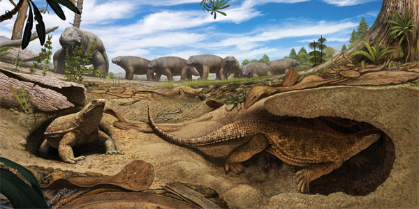 An artistic rendering shows an early proto-turtle Eunotosaurus (foreground) burrowing into the banks of a dried-up pond to escape the harsh arid environment present 260 million years ago in South Africa. In the background, a herd of Bradysaurus congregates around the remaining muddy water. (Artwork by Andrey Atuchin)