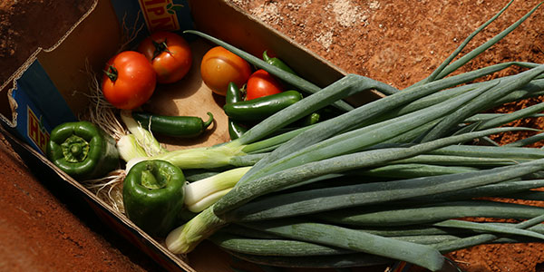 Harvested vegetables in box