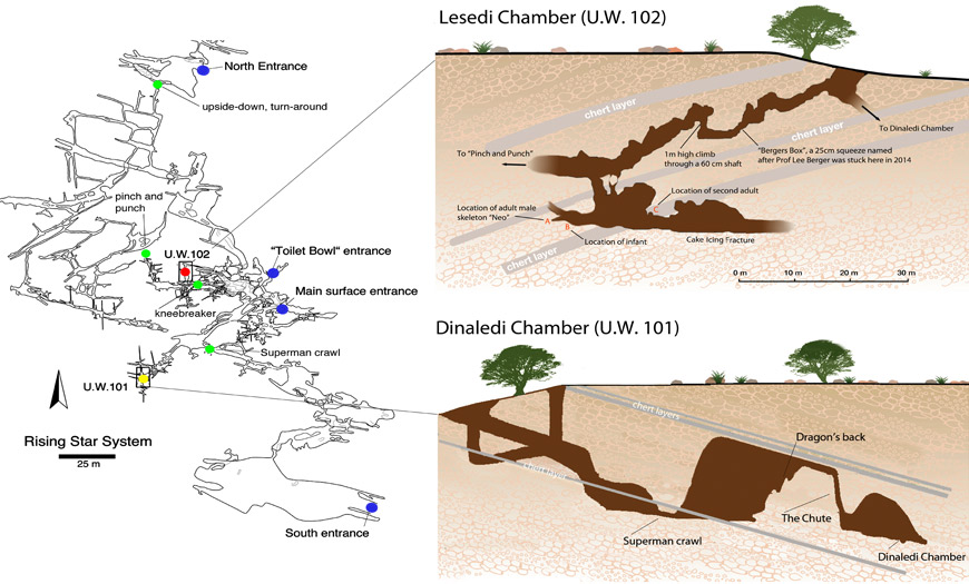 Schematic representation of the Rising Star Cave system. ©Wits University