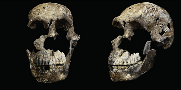 The Neo skull of Homo naledi from the Lesedi Chamber. ©Wits University/John Hawks