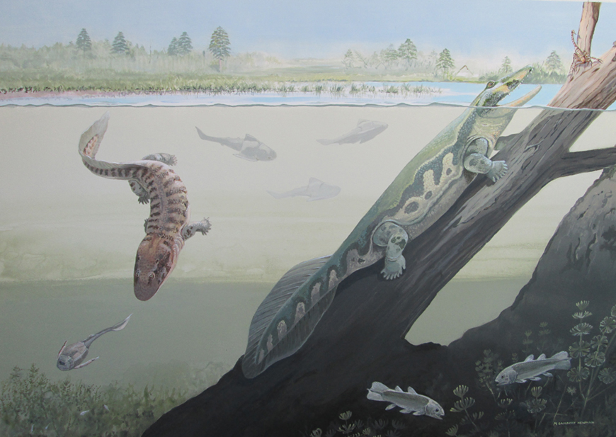 Artist impression of the Waterloo farm in the Devonian, including Tutusius and Umzantsia. Art by Maggie Newman.