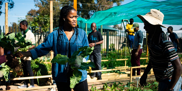Wits student harvesting crop from the Wits Food Garden