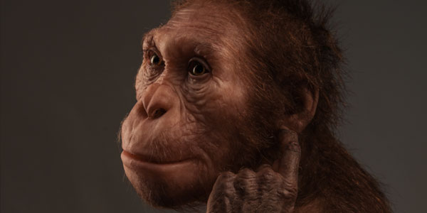 Life reconstruction of Australopithecus sediba commissioned by the University of Michigan Museum of Natural History (© Sculpture Elisabeth Daynes / Photo S. Entressangle).