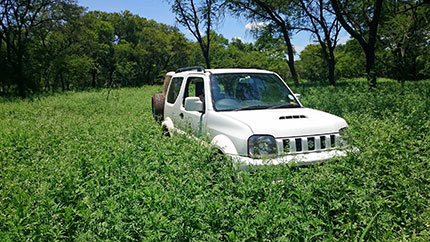 A Wits University vehicle is stuck in a field of Parthenium, outside the Kruger National Park in South Africa. Credit: Blair Cowie