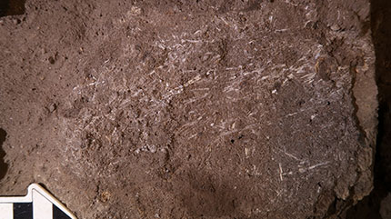 200,000 Year Old Bed Discovered